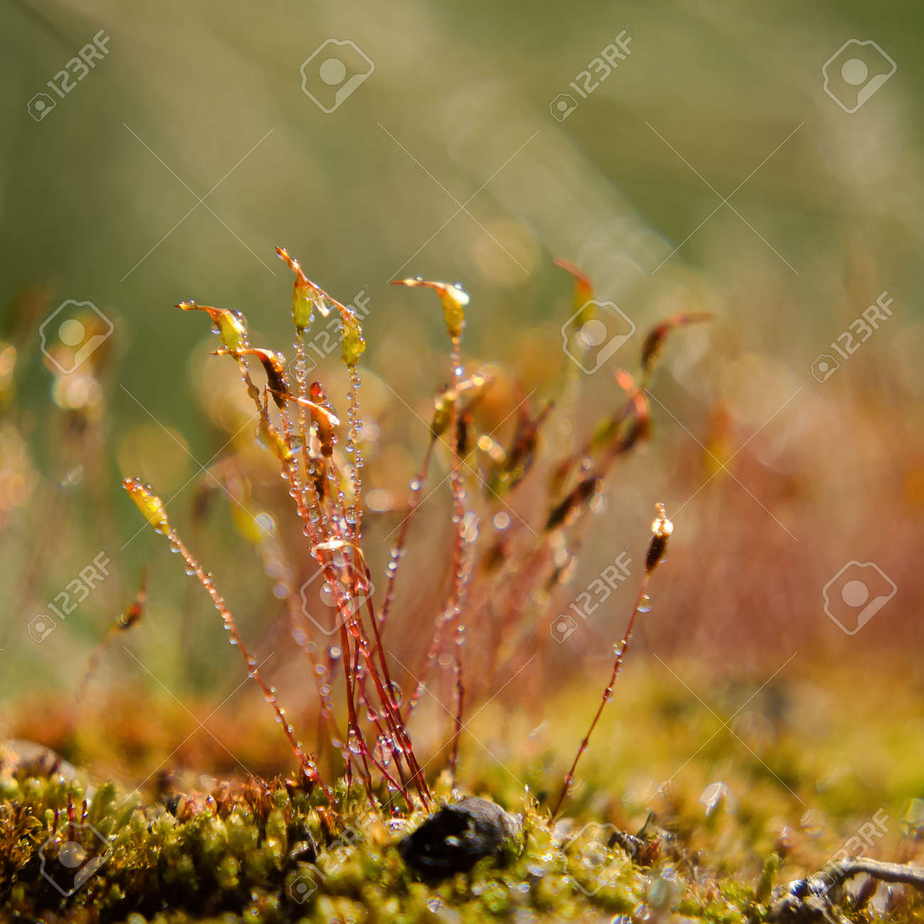 BLOOMING MOSS - A forest glade in the rays of the sun - 168070522