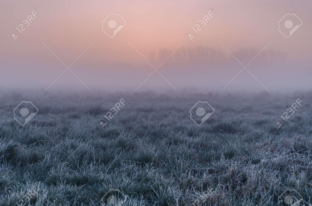MISTY SUNRISE - A picturesque morning over the meadows - 168070526