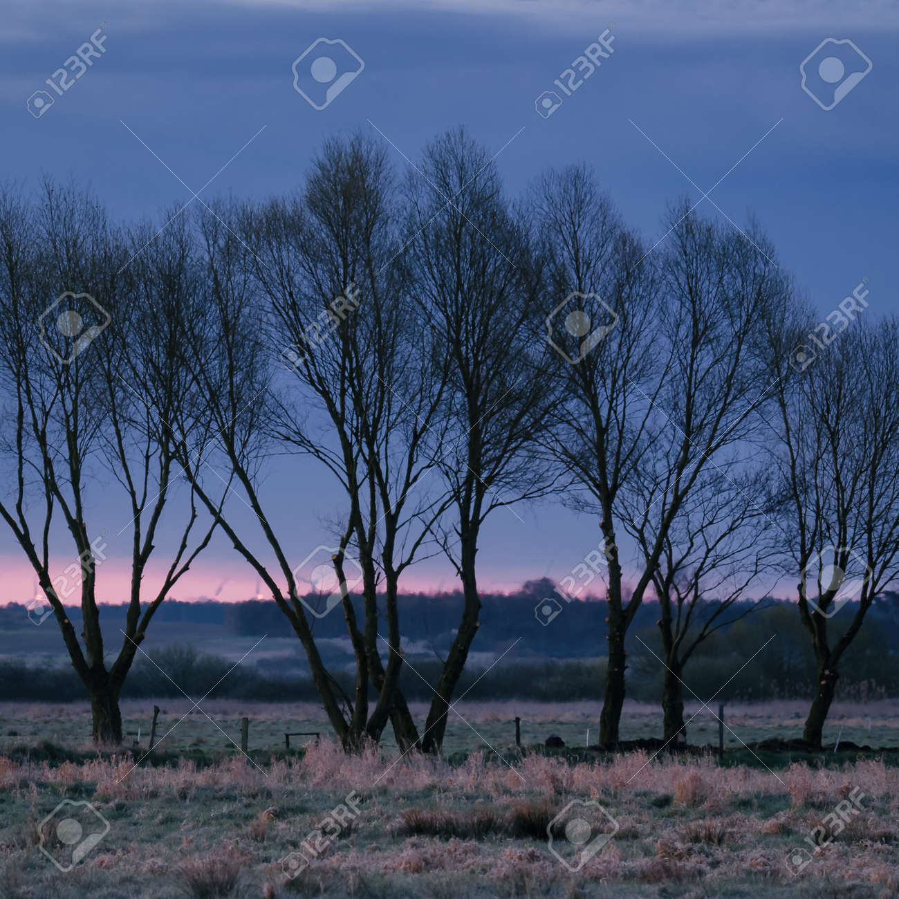 TREES - A picturesque morning over the meadows - 168477657