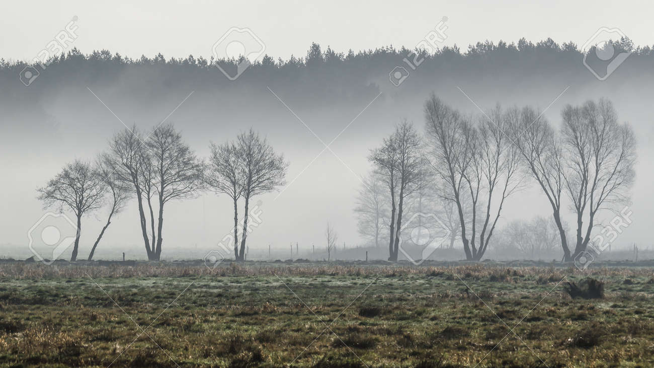 MISTY TREES - A cool spring morning on the meadow - 168433588
