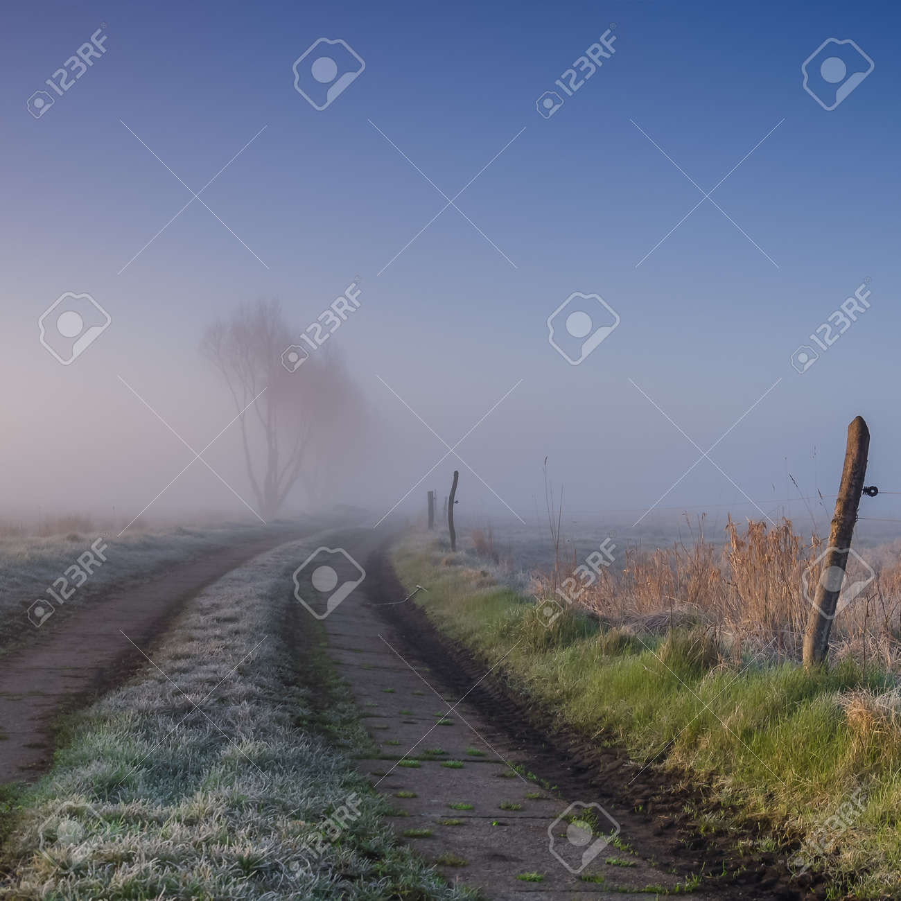 MISTY GRASSLAND - A cool spring morning on the farm - 168433606