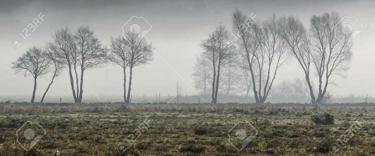 MISTY TREES - A cool spring morning on the meadow - 168477415