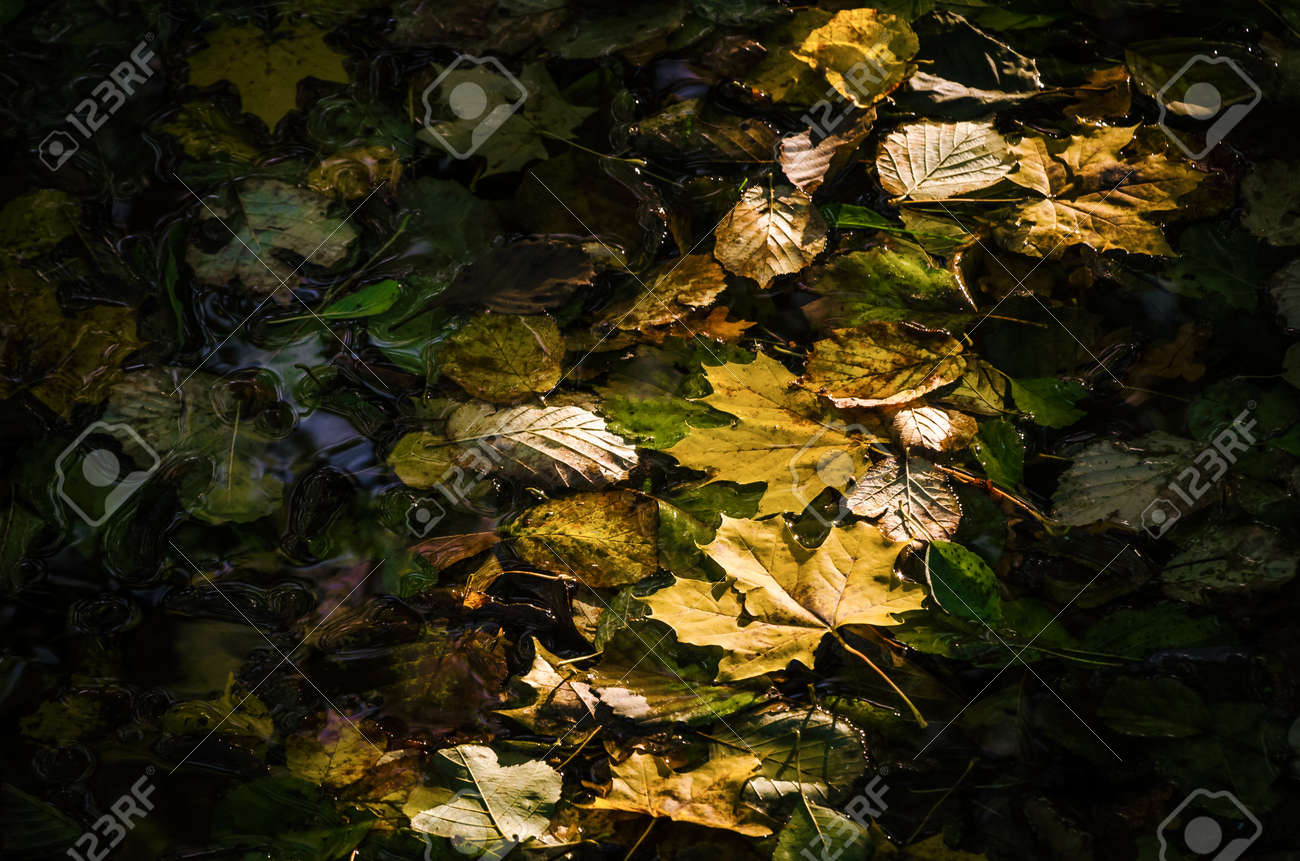AUTUMN LEAVES - A colorful season on the river in the sunshine - 169540988