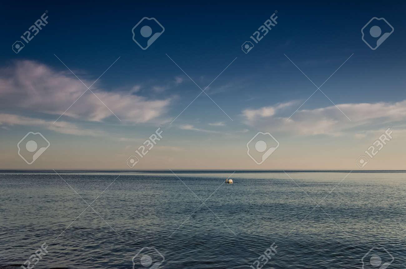 SWAN - The white bird swims in sea - 169540993