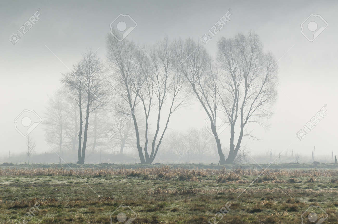 MISTY TREES - A cool spring morning on the meadow - 169541042