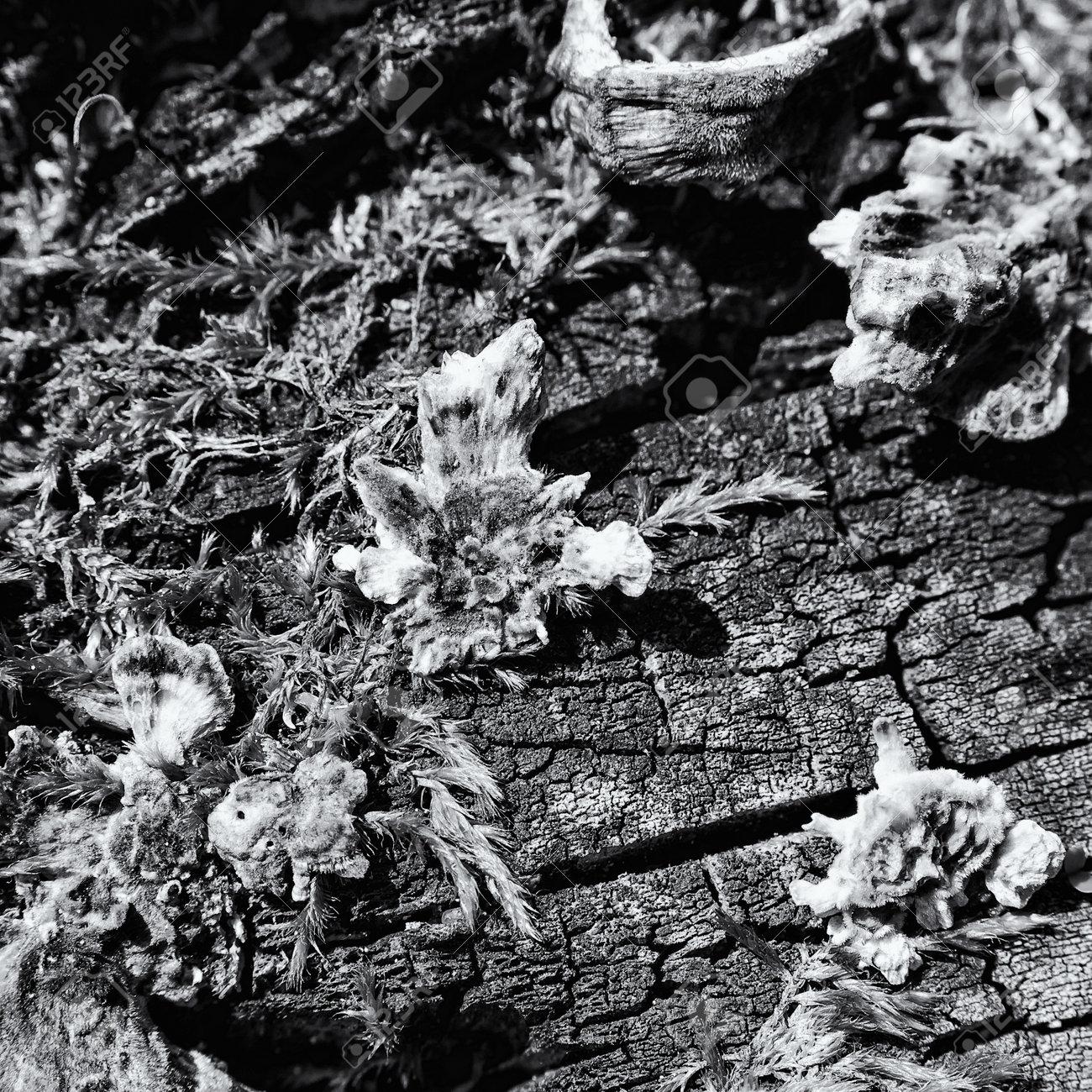 HUBS - Mushrooms on a dead tree trunk - 169541108