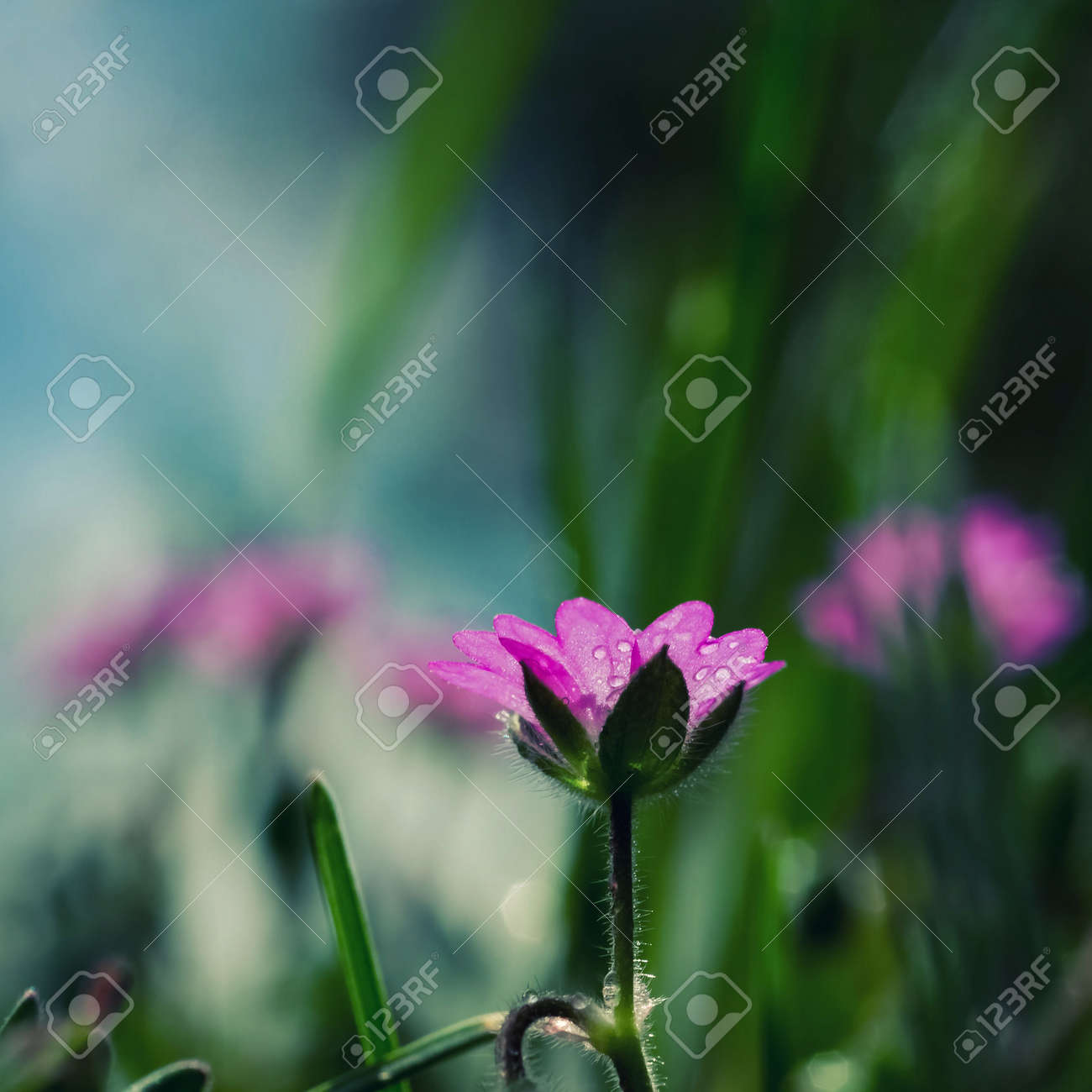 FIELD FLOWERS - Colorful spring in the meadow - 169541114