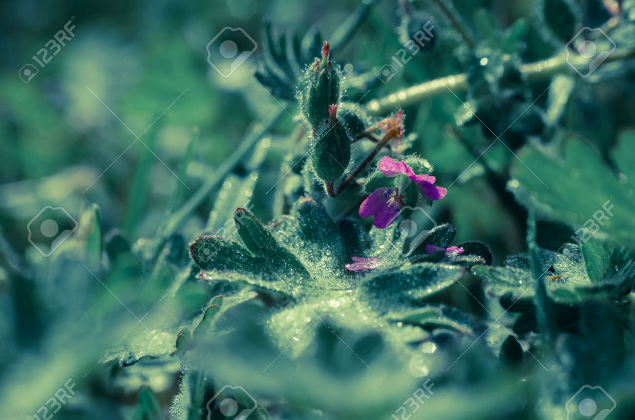 FIELD FLOWERS - Colorful spring in the meadow - 169541115