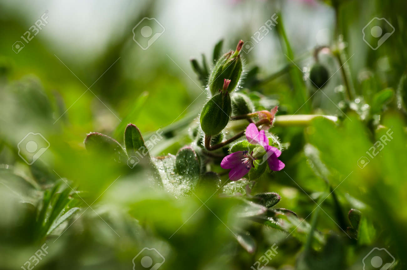 FIELD FLOWERS - Colorful spring in the meadow - 169541170