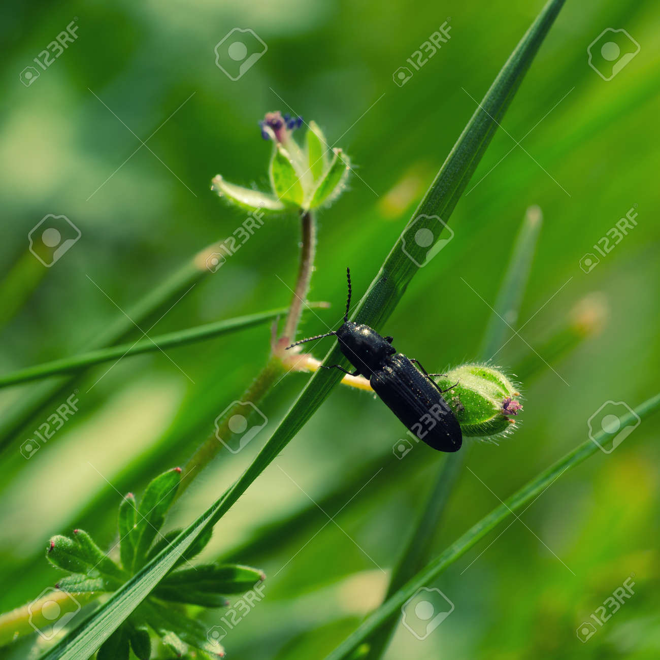 INSECT ON THE GRASS - Landscape in the spring meadow - 169541171