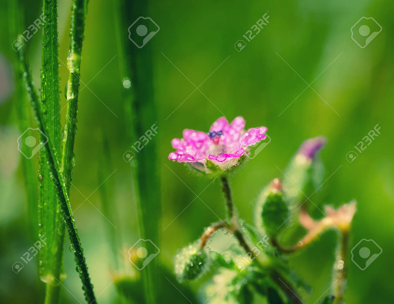 FIELD FLOWERS - Colorful spring in the meadow - 169541174