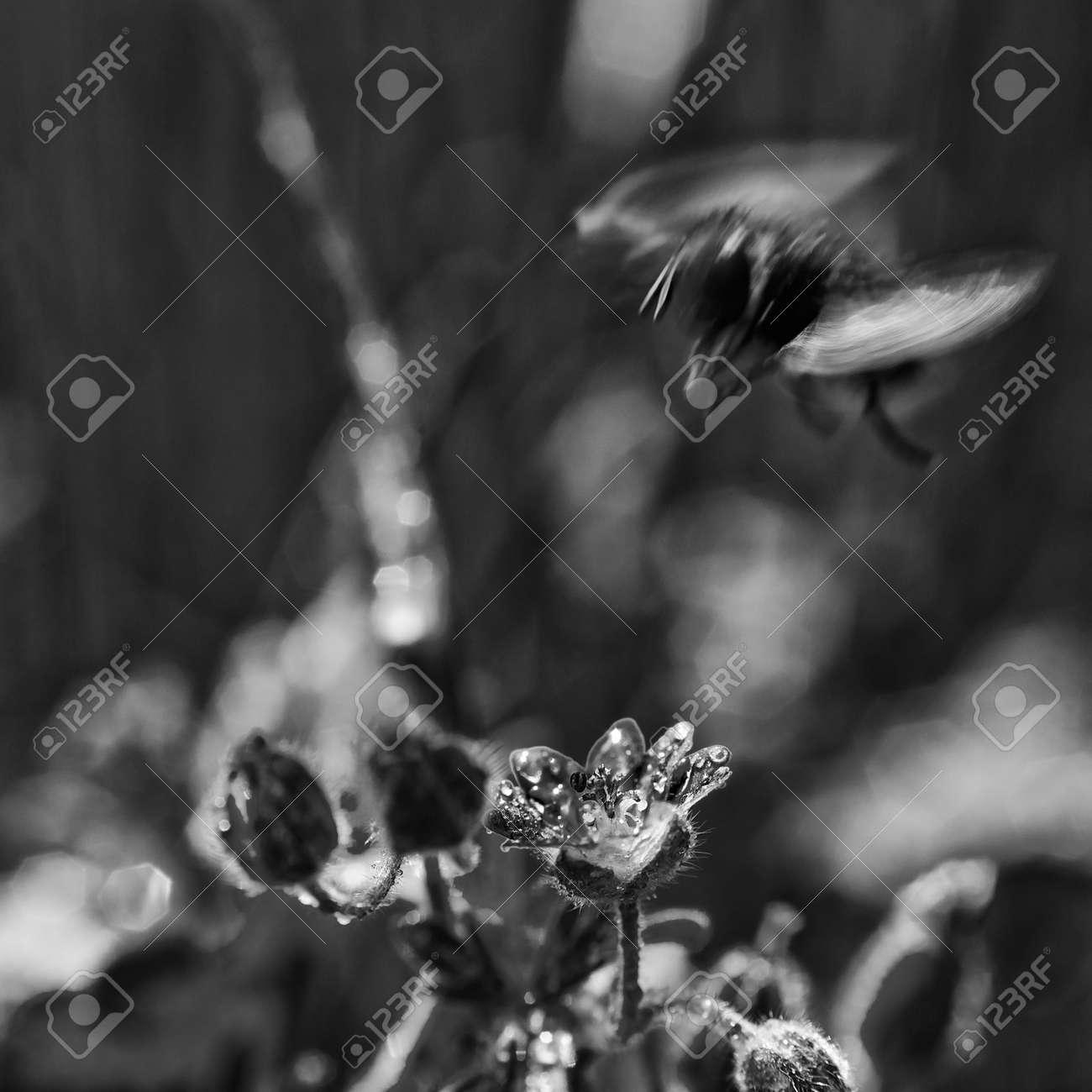 FIELD FLOWERS - Landscape in the spring meadow - 170164186