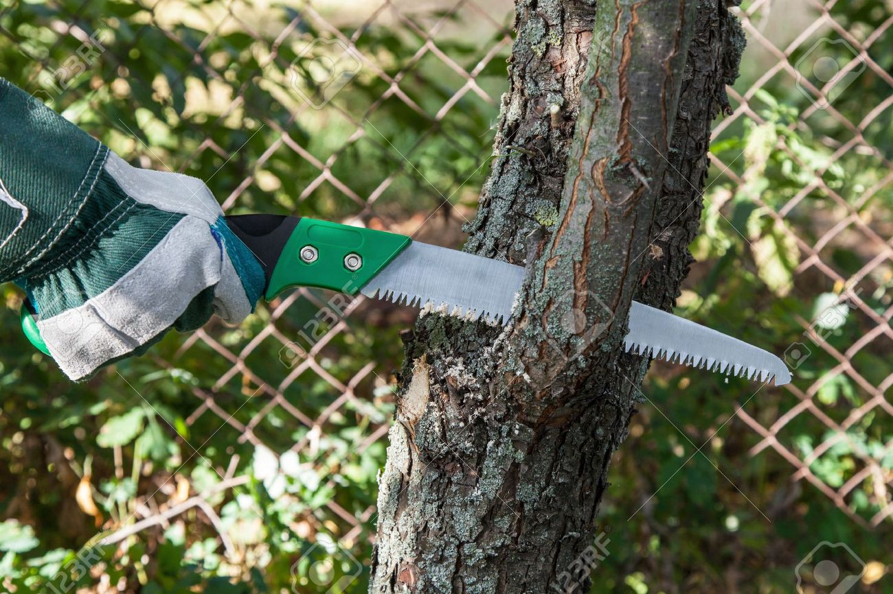 Pruning fruit trees garden with a hacksaw - 21886693