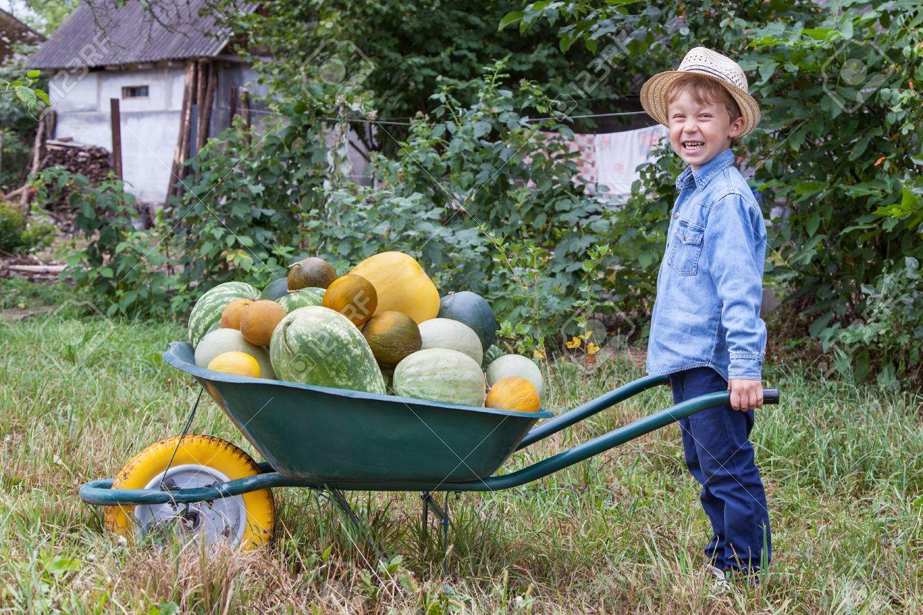 Boy with a full wheelbarrow in garden helps harvest crops - 31287503