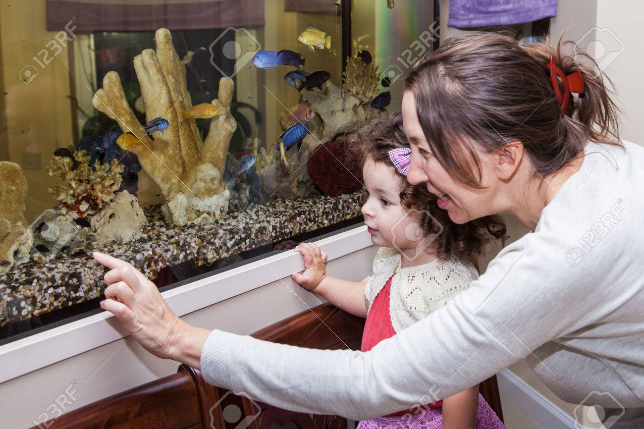 Grandmother and granddaughter looking at fishes in home aquarium - 32337331