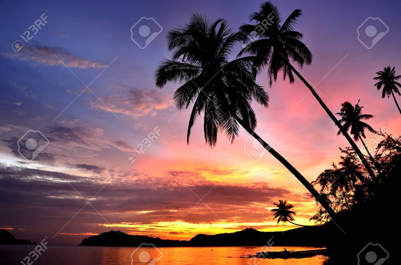 Palm Trees Silhouette At Sunset Stock Photo - 11209238