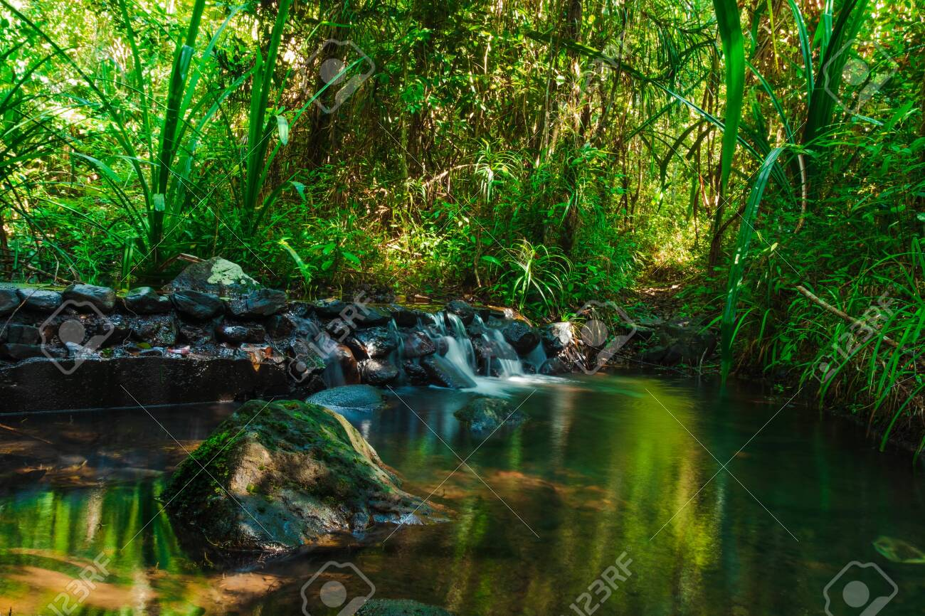 Beautiful mountain stream flow through abundant forests in rainforest of Koh yao yai,Phang Nga,Thailand - 137967241