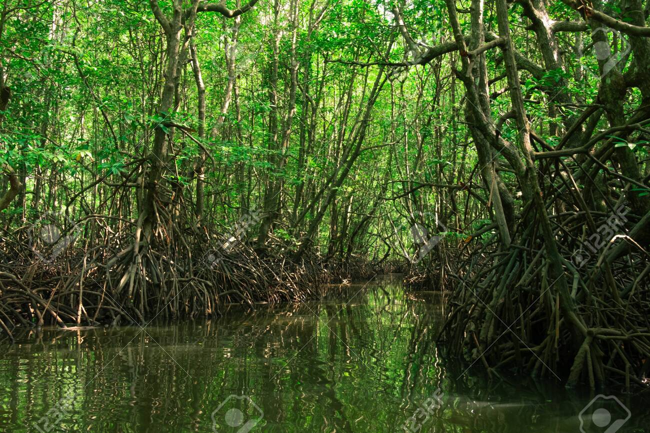 Tangled Roots And Changing Tides Stock Photo Picture And Royalty Free Image Image 141635708