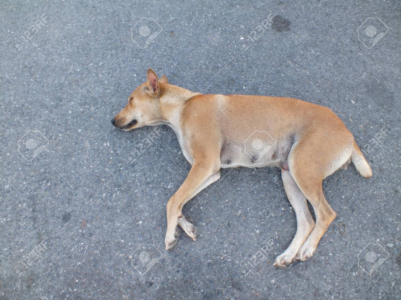 Sleeping dog Stock Photo - 17216266