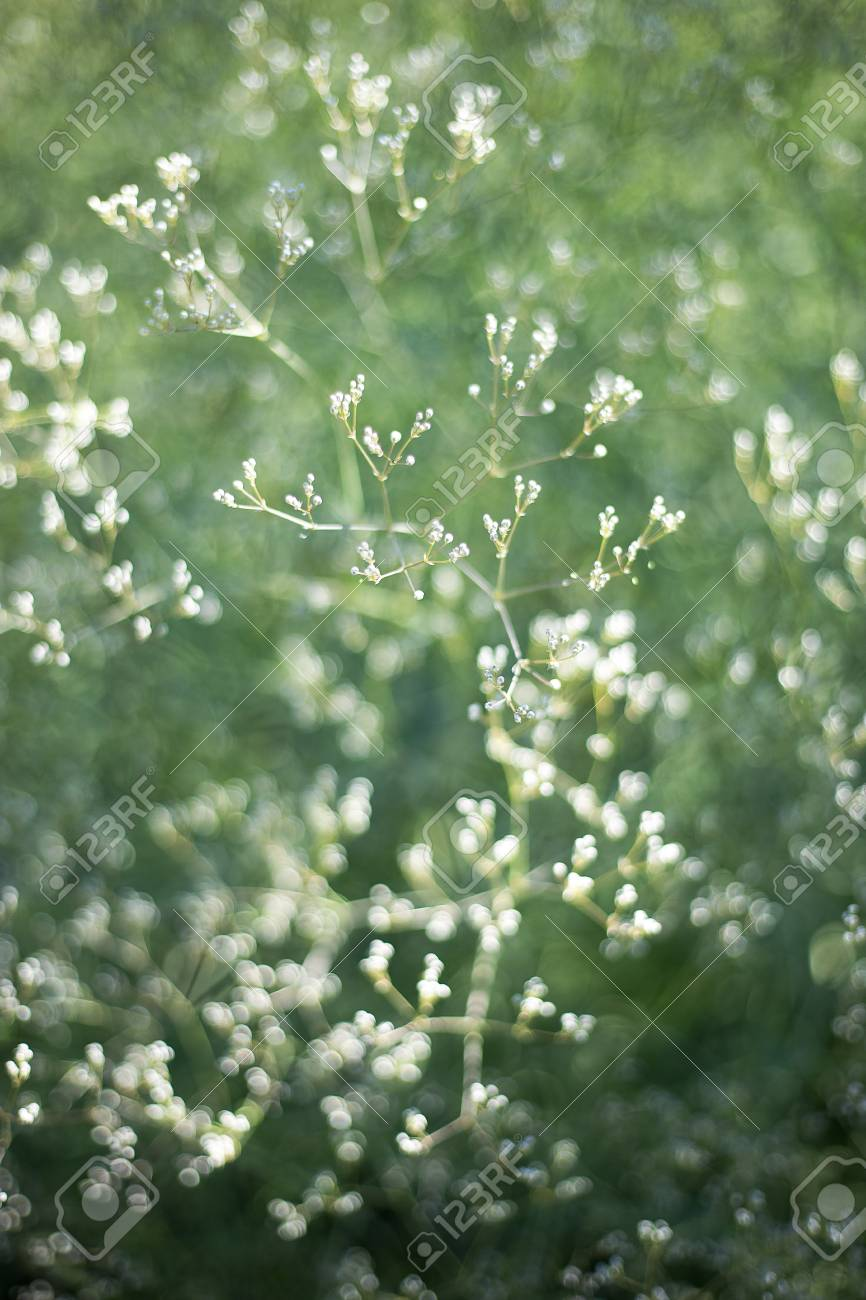Flower Pattern Of Wildflowers. Small White Flowers On Green Background...  Stock Photo, Picture And Royalty Free Image. Image 108386166.