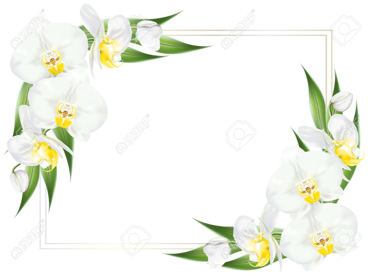 Square Frame Decorated With Branches Of Tropical Orchid Flower