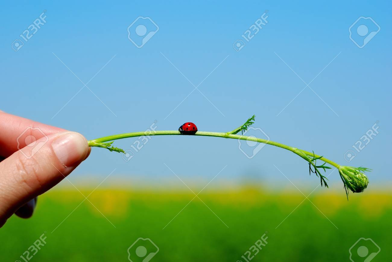 Stalk of the plant bent under the weight of a jumbo jet Stock Photo - 9287442
