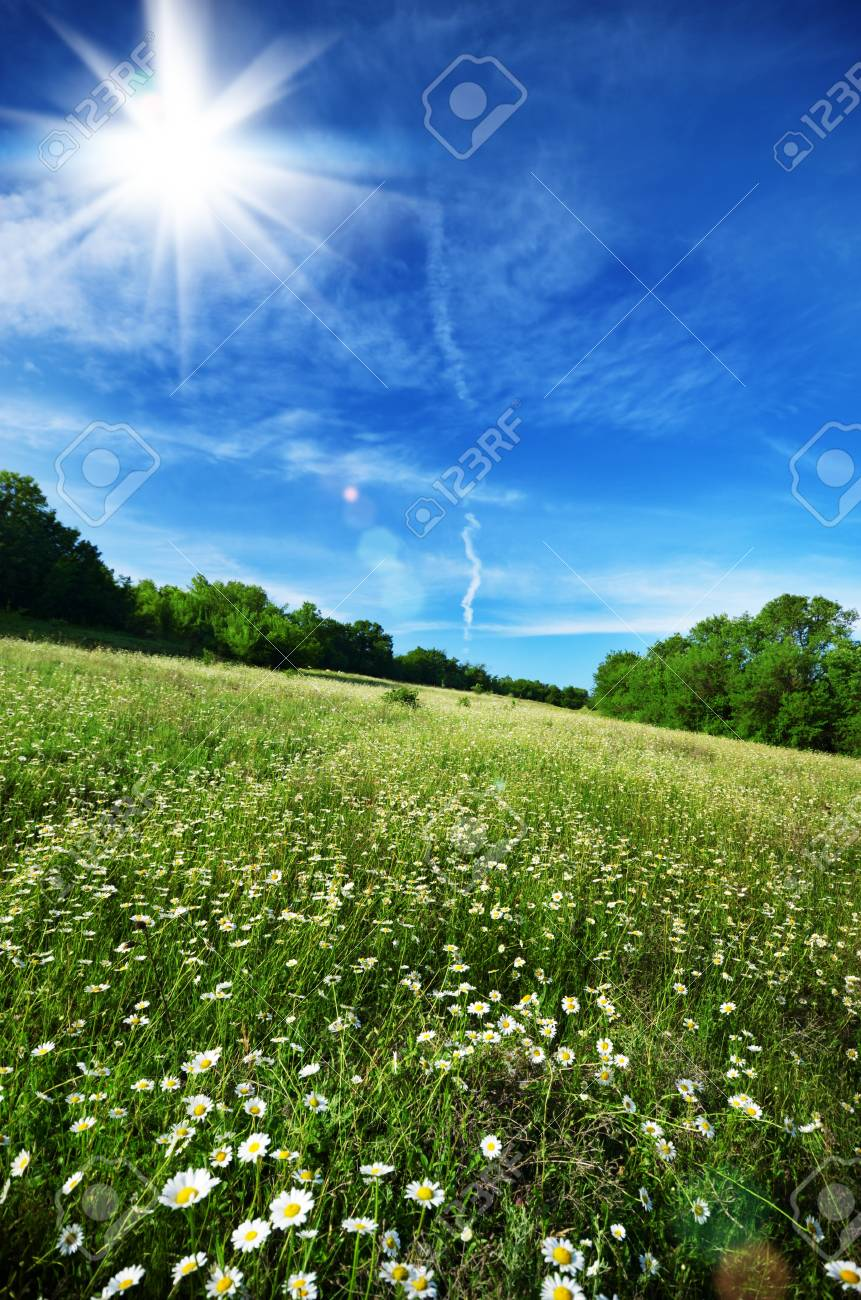 Field of daisy flowers under blue cloudy sky Stock Photo - 18150467