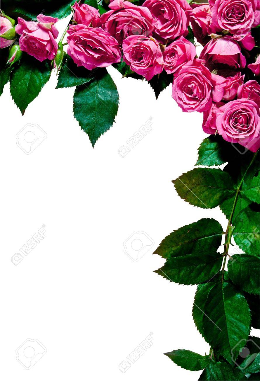 Rose Frame Portrait Orientation Isolated On White Great As Stock