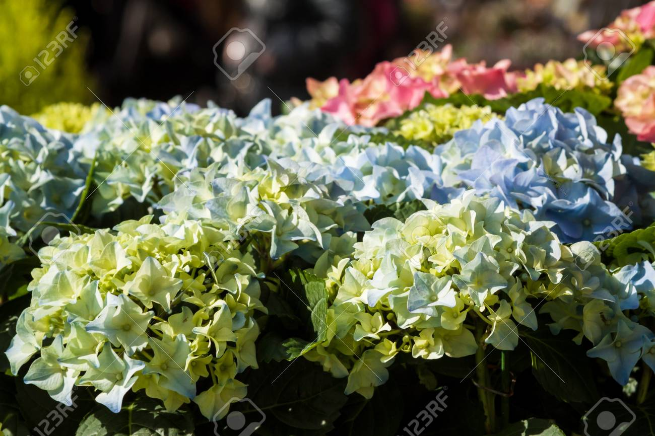Beautiful Spring Flowers For Sale At Street Market Focus On Stock