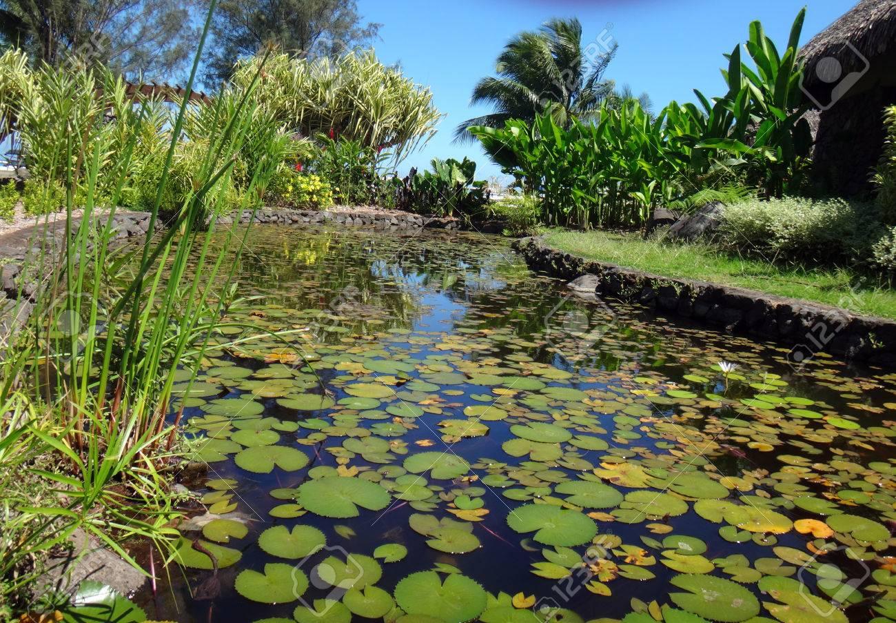 TAng à poissons d\'ornement des Jardins de Pa\'ofa\'i (Jardin de Paofai) à  Papeete, Polynésie française.