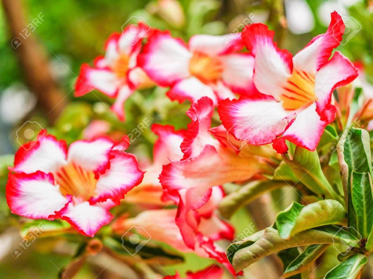 Un rbol Con Flores Hermosas Y El Nombre De Buen Augurio Fotos