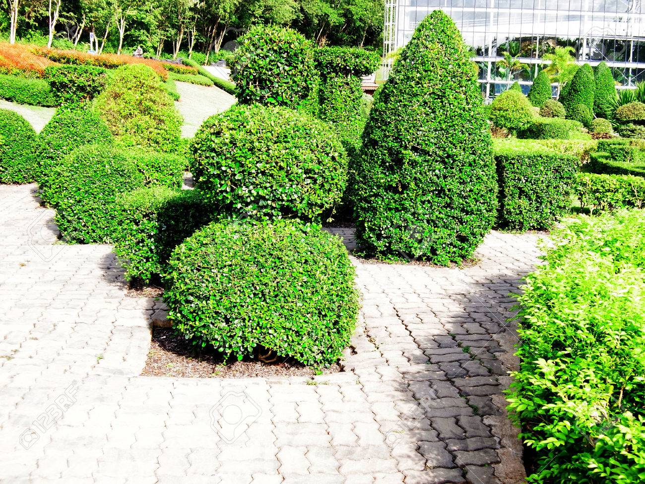 Multiple Rough Bushes In Garden Decoration Stock Photo Picture