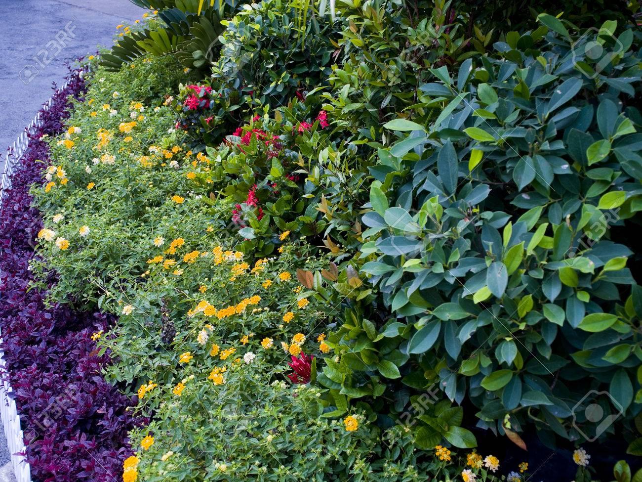 Piante Per Recinzioni Giardino.Immagini Stock Un Piccolo Giardino Con Piante Ornamentali Colorate