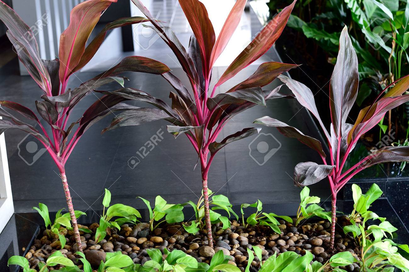 The Colorful Plants Prefer Full Sun To Shade And Can Tolerate