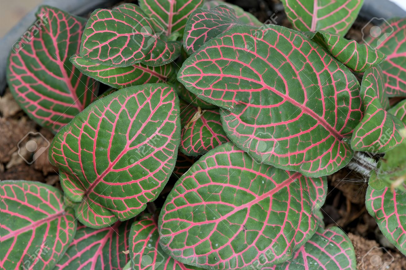green plant with red veins