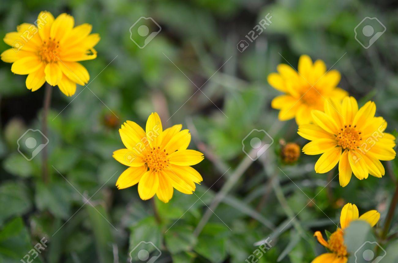 Yellow Flowersweeds Stock Photo Picture And Royalty Free Image