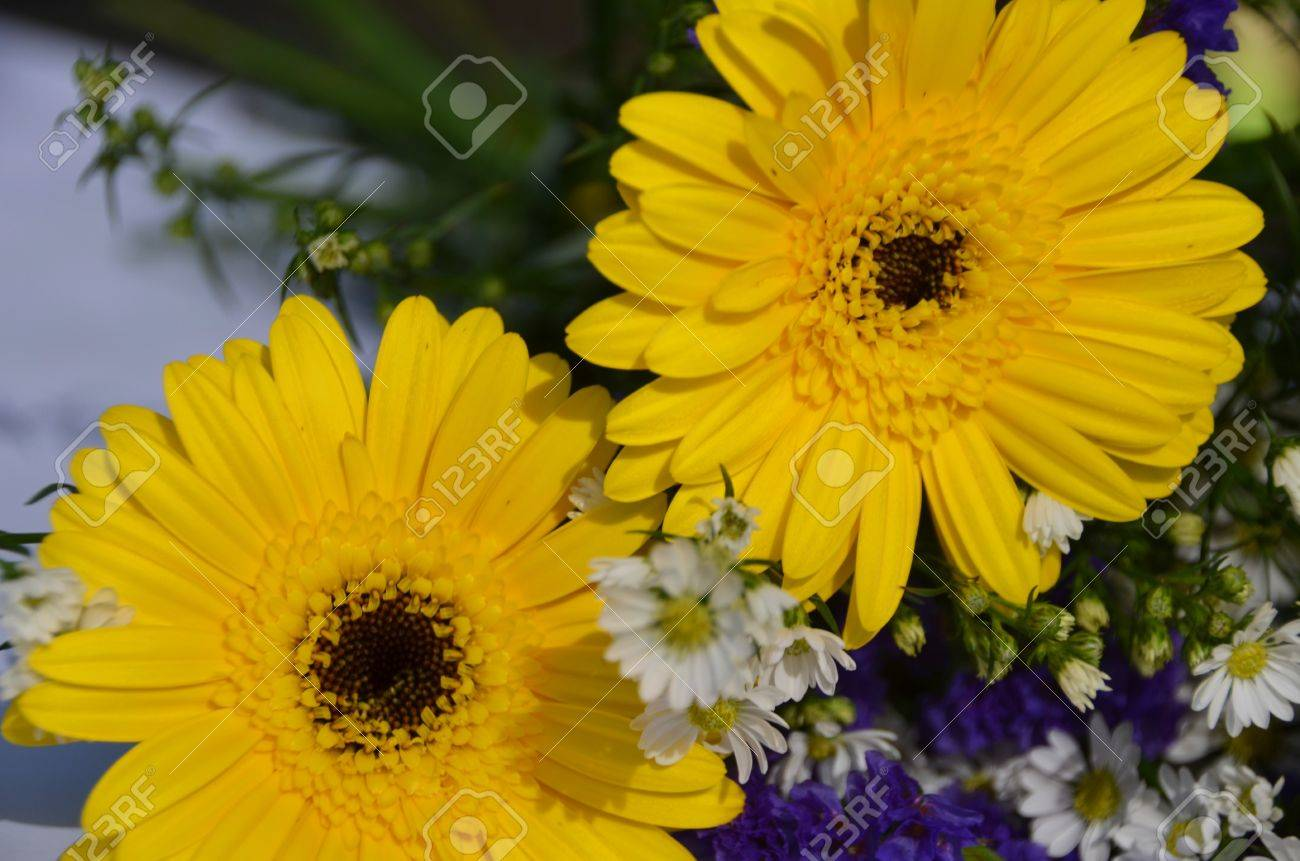 Yellow gerbera mixed with different types of small flowers stock stock photo yellow gerbera mixed with different types of small flowers mightylinksfo