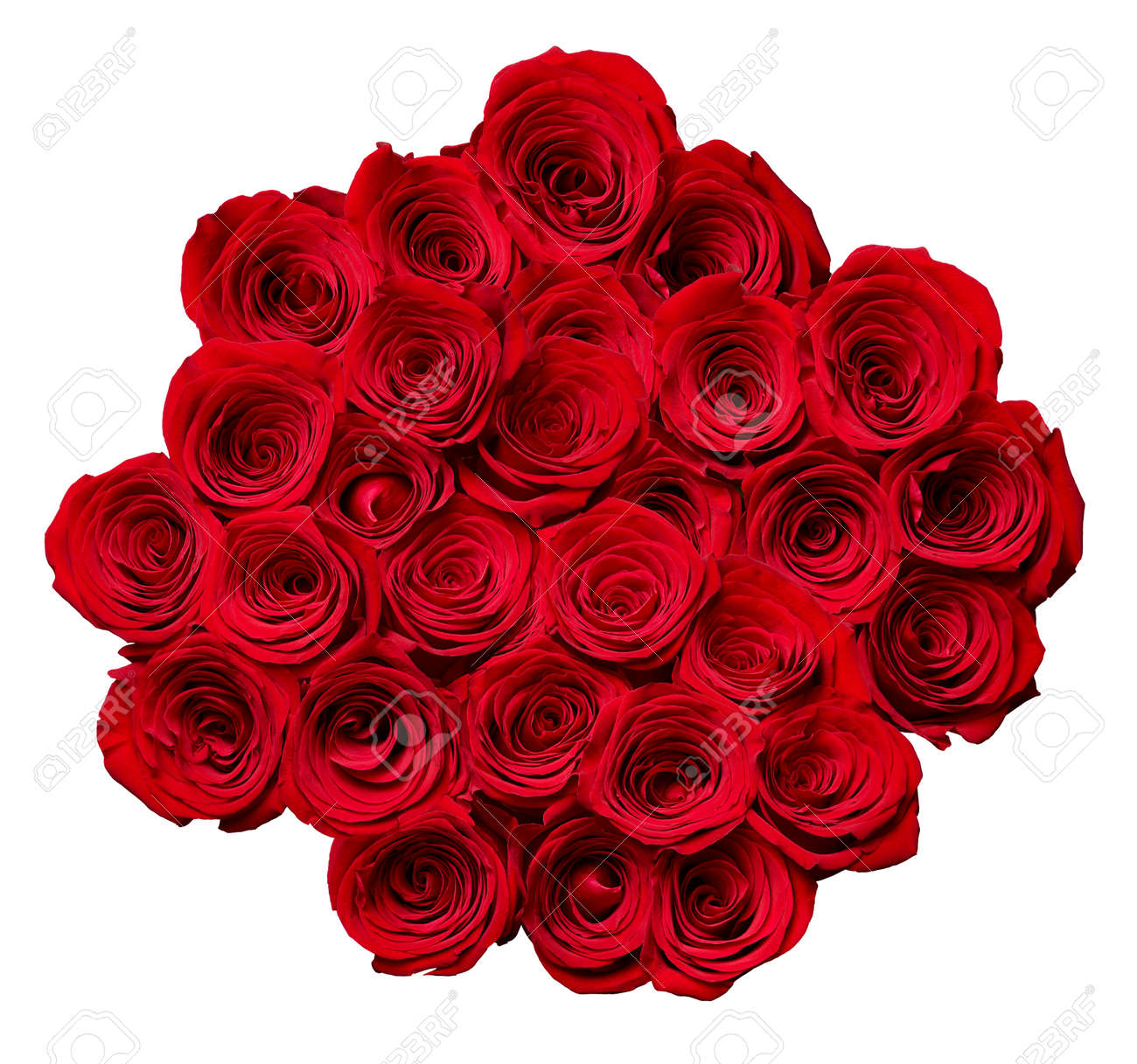 close up of roses on white background - 131759044
