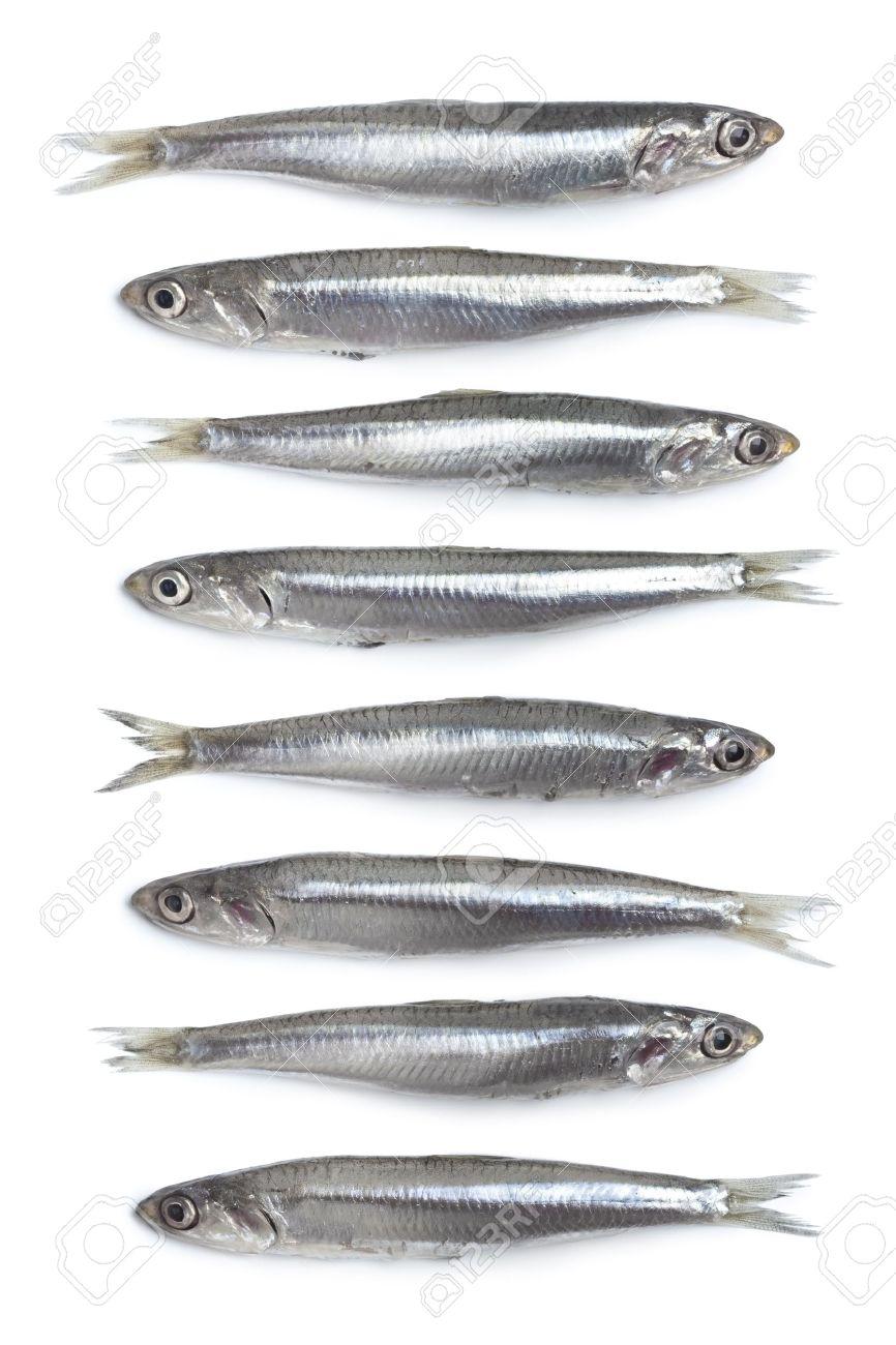 Whole fresh raw European anchovy on white background Stock Photo - 7642039