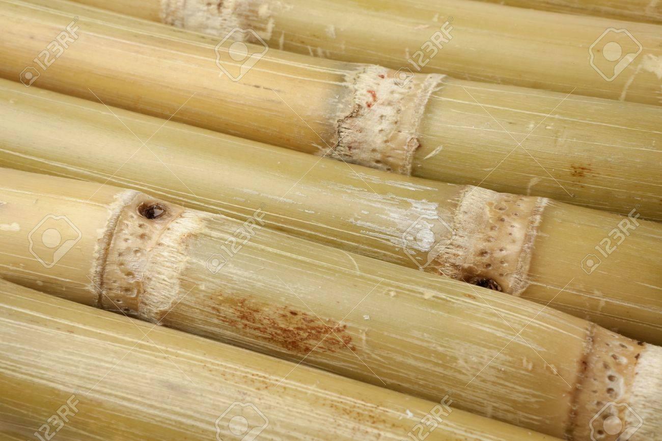 Fresh pieces of sugar cane sticks full frame Stock Photo - 8481911