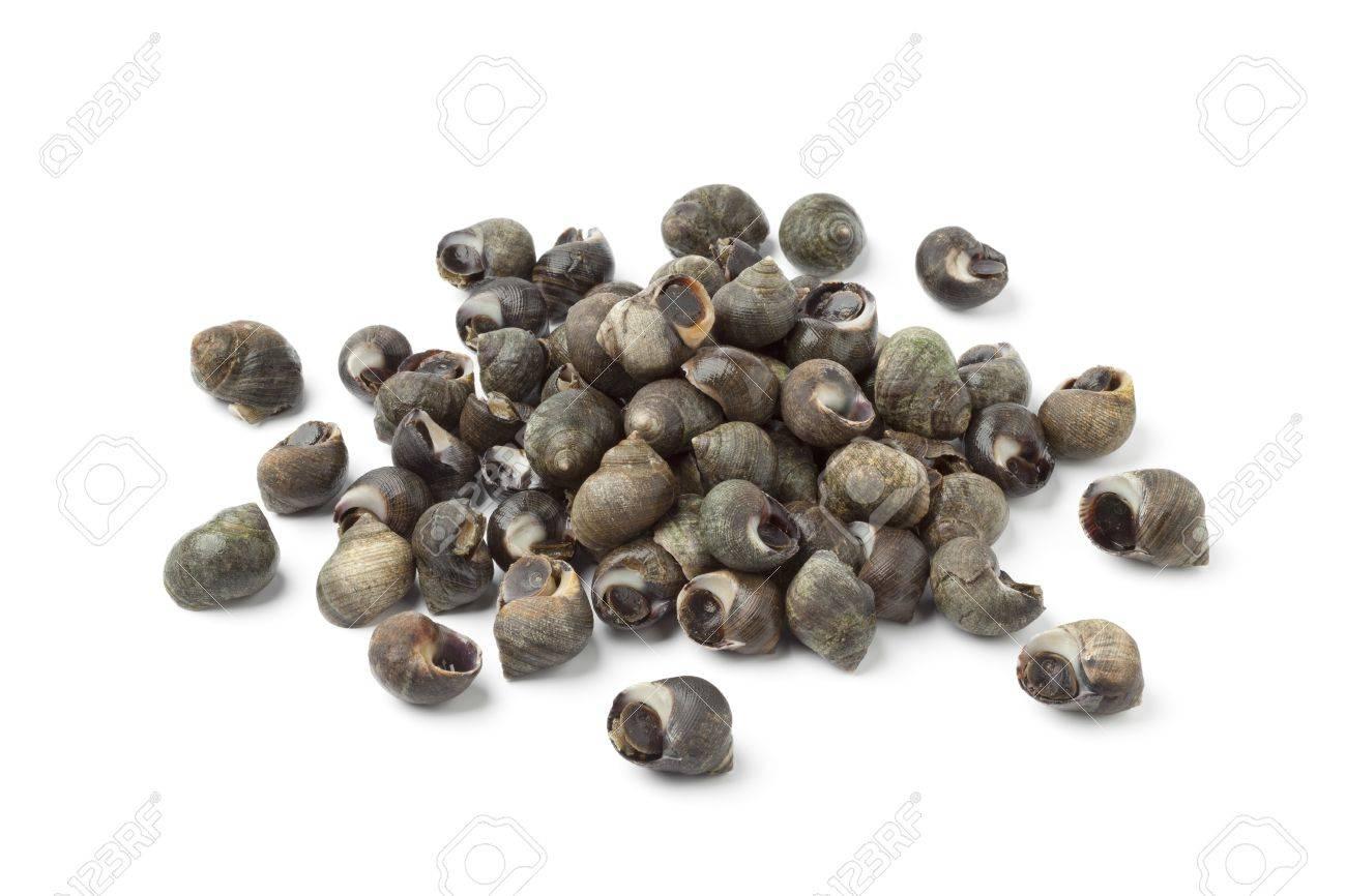 Fresh common periwinkles on white background - 13598122