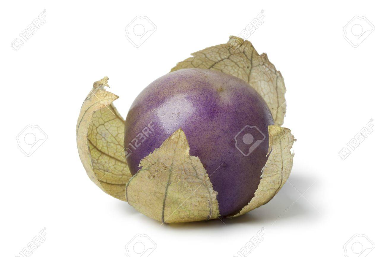 Fresh purple tomatillo in a husk on white background - 15514976