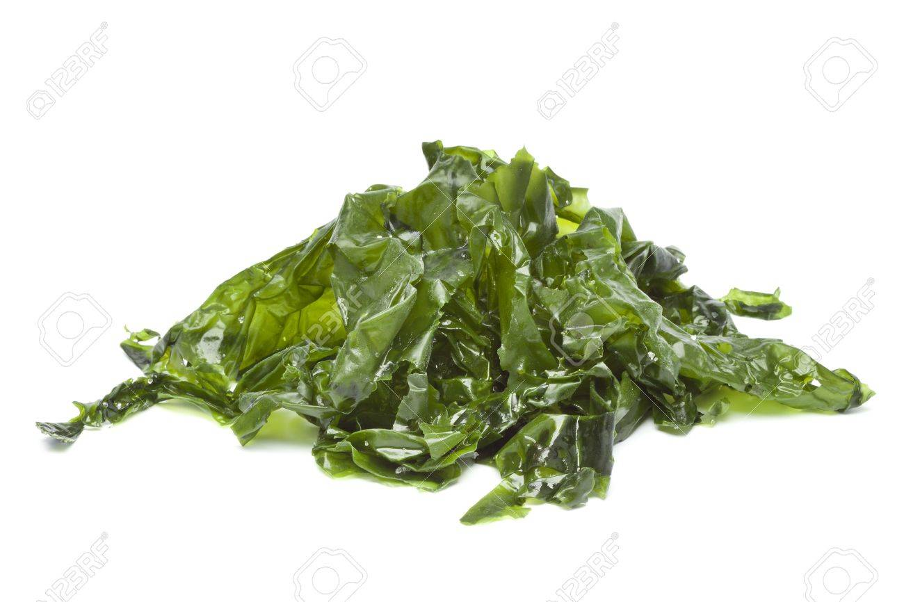 Salted sea lettuce on white background - 18587613