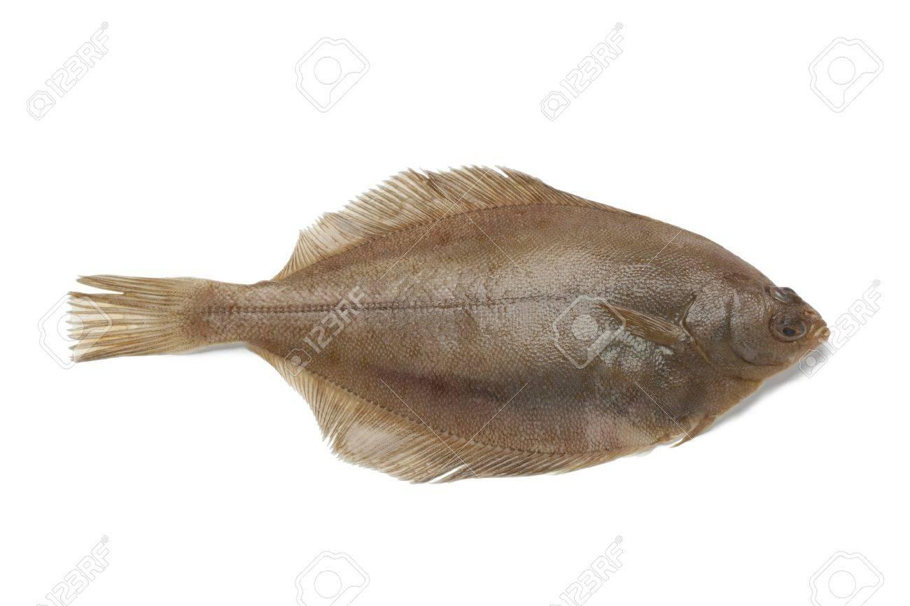 Single Common dab fish on white background - 18843444