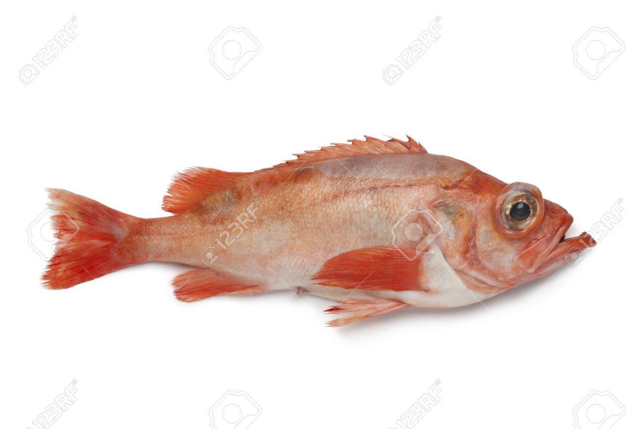 Single redfish on white background - 19631145