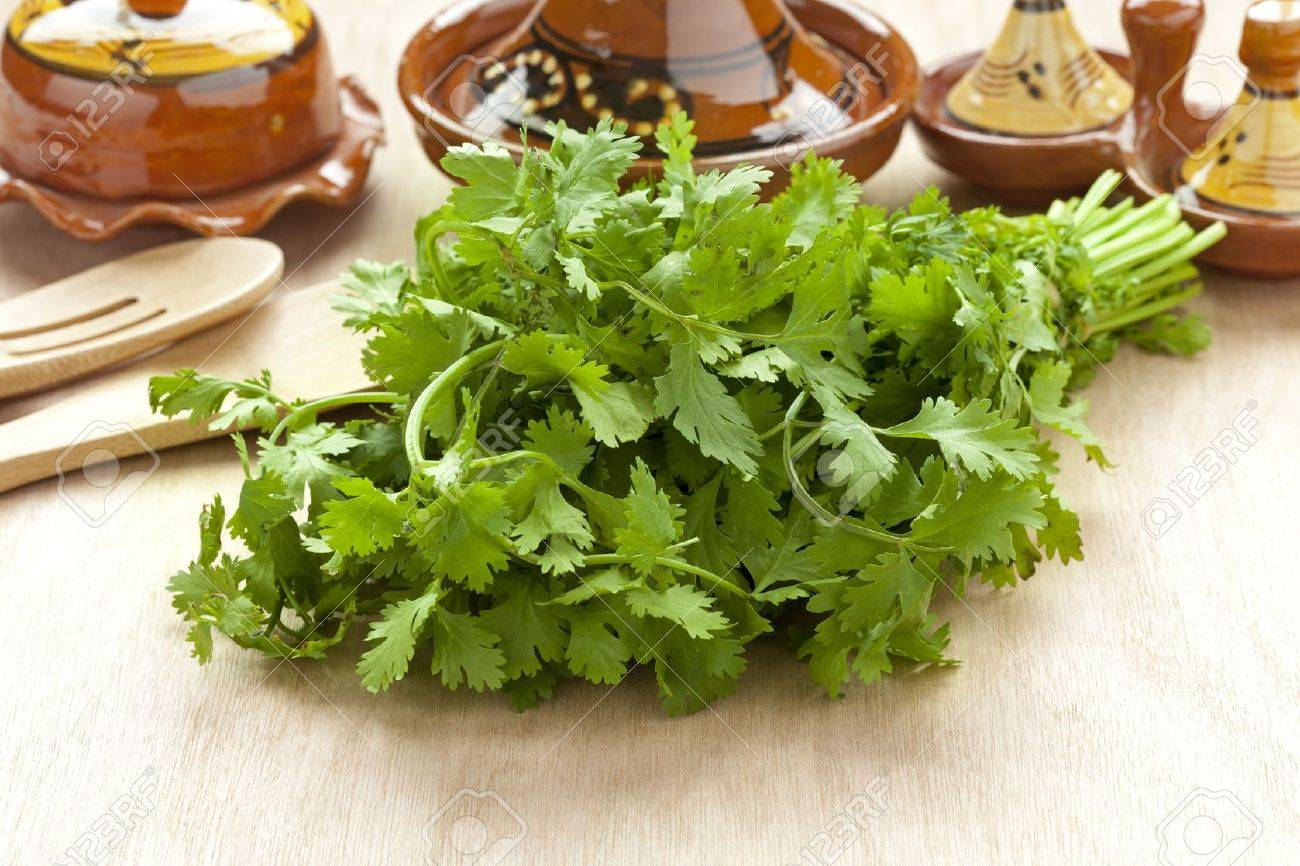 Fresh bunch of coriander on the table - 20333649