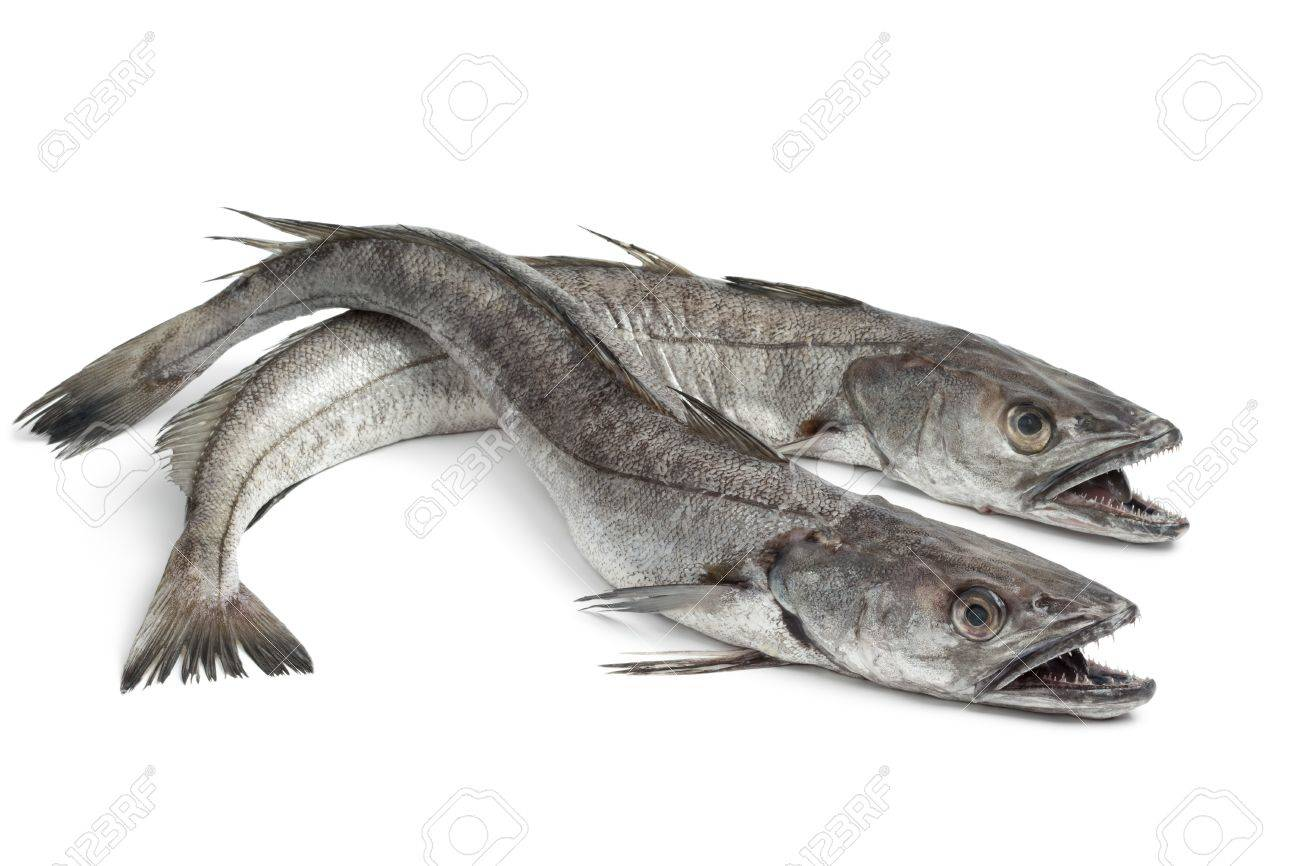 Two Hake fishes on white background - 21859863