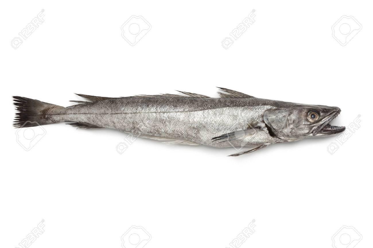 Single fresh Hake fish on white background - 23215297