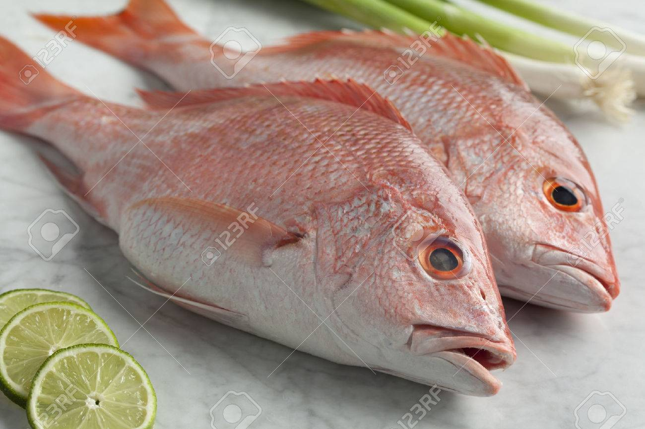 Fresh red snappers ready to cook - 31741468