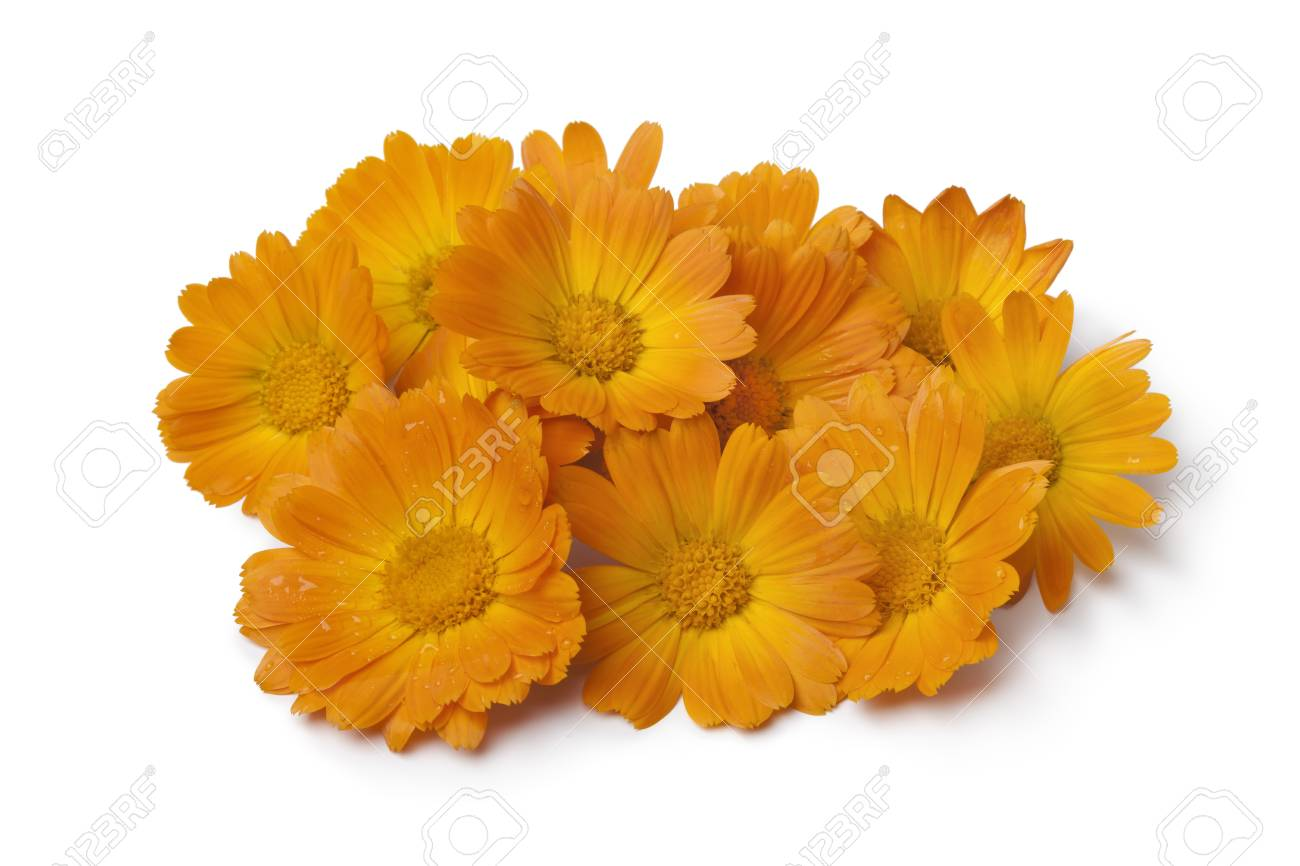 Heap of fresh orange pot marigold flowers on white background stock heap of fresh orange pot marigold flowers on white background stock photo 46608893 mightylinksfo